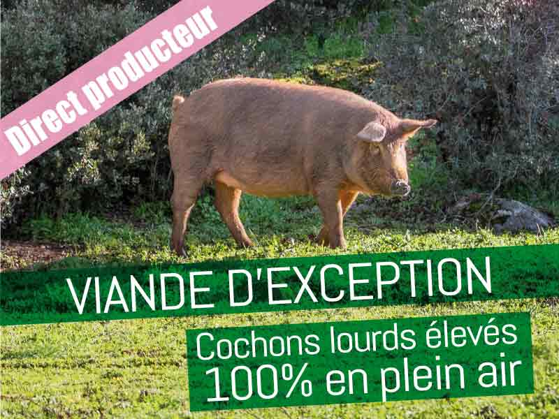 Cochon Plein Air Chez Sam